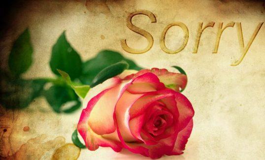 Sorry - Rose - pixbay